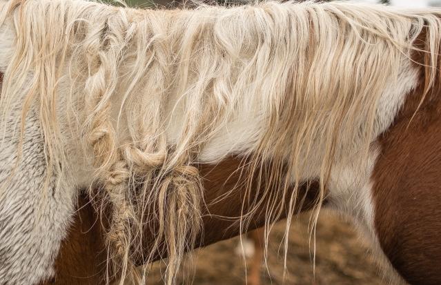 Horse Mane (1 of 1)